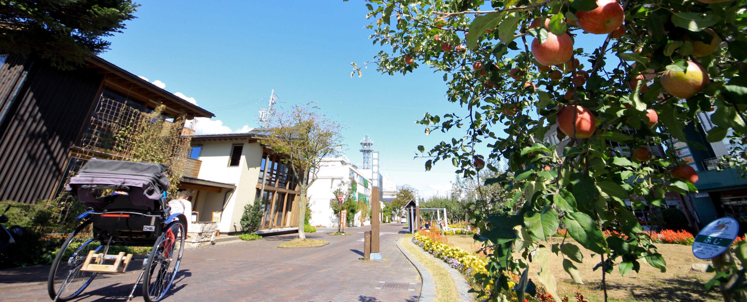 飯田りんご並木_トップ画像1