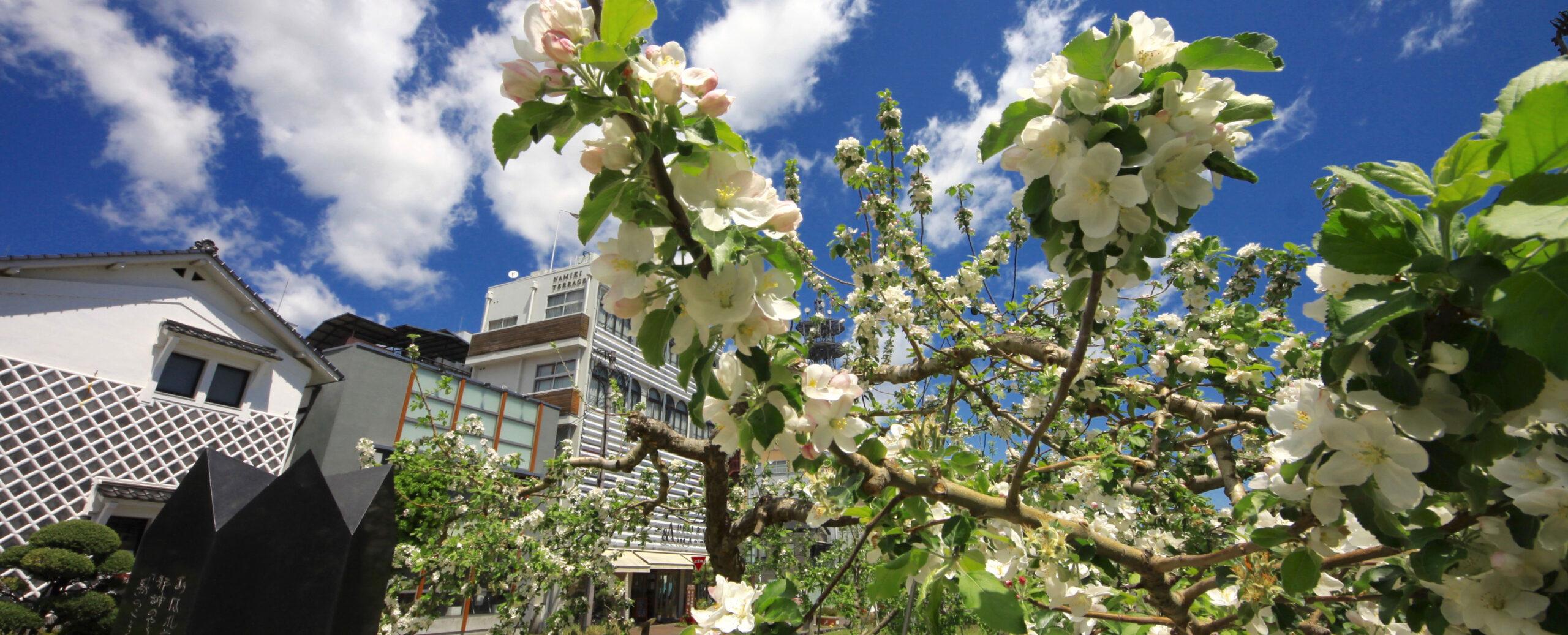 飯田りんご並木_トップ画像3