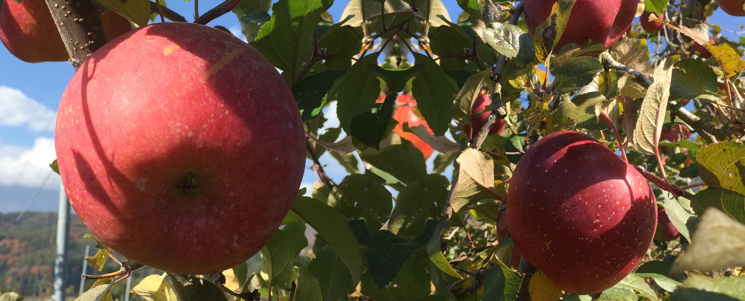 飯田りんご並木_トップ画像4
